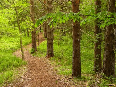 wooded-path-1315227